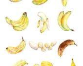 "Art Print - ""50 Shades of Bananas"" - 8x10 tropical fruit botanical illustration"