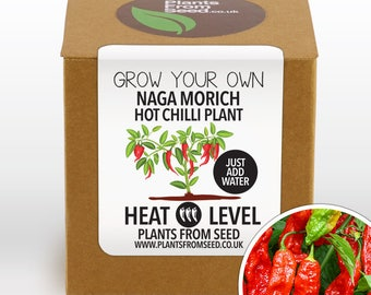 Grow Your Own Naga Chilli Plant Kit