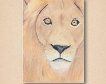 Lion colored pencil portrait 11x14 print