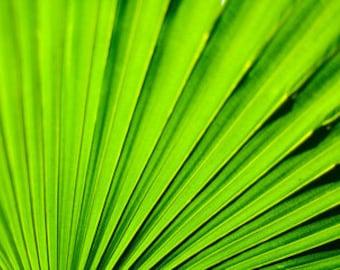 Closeup of Anahaw Leaf - Fine Art Photographic Print