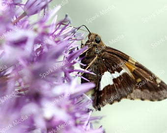 Moth and Flowers