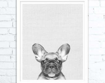 French Bulldog Print, Dog Print, Animal Print, Nursery Print, Puppy Print, Dog Art, Wall Art, Poster, Prints, Dog Photography, Puppy Art