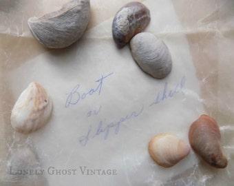 Seashell Photo / Beach Cottage Decor / Slipper Shell Photography / Vintage Shells / Nature Art