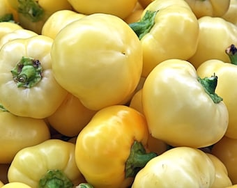 Yellow Bell Peppers pear shape