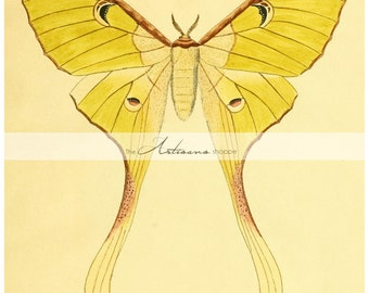 Printable Art Instant Download - Luna Moth Green Wing Moth Butterfly Insect Wings Nature Art Vintage - Paper Crafts Scrapbook Altered Art