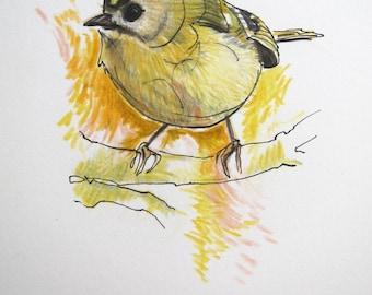 Goldcrest original drawing