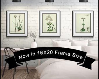 Set of 3 White Flower Botanical Prints - Matted and Framed - 16X20 Frame Size - Free Shipping