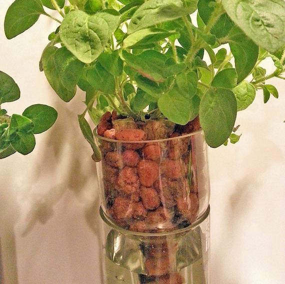 refill kit for hydroponic garden in wine bottle indoor herb garden wine gift bottle planter. Black Bedroom Furniture Sets. Home Design Ideas