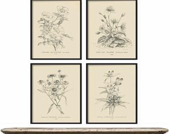 Botanical Print Set of 4 - Botanical Vintage Prints, Antique Botanical Print Set, Vintage Botanical Prints - Rustic Decor - Home Decor Art