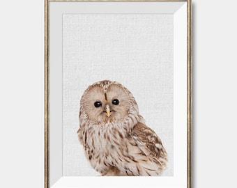 Baby Owl Print, Nursery Decor Instant Download, Owl Wall Print, Woodlands Animal Art, Owl Photography, Bird Print, Owl wall art, Baby Animal
