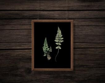 Fern Clip Art - Fern Illustration - Black Background - Vintage Botanical Print - Printable - Digital Download - JPG - PNG - No Background