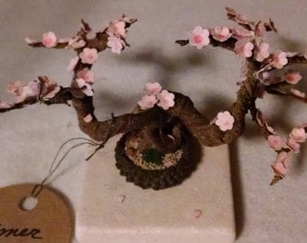Acorn Cap Bonsai Tree - Cherry Blossom