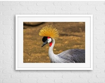 Decorative Bird Art Photo With Frame