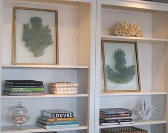 Pair Framed Sea Fans - Emerald Green