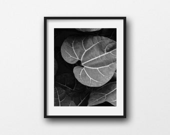 Heart Shaped Leaf, Nature Photography, Black and White, Botanical Print, Wall Art, Tropical Plant, Leaf Picture, Photo Print, Home Decor