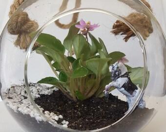 Medium sized terrarium - hanging fishbowl