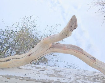 "30"" x 13.5"" Hand Sanded Manzanita Branch For Pet Habitat"