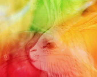 Hare — Color photo. Modern, abstract and colorful wall art and decoration. Hi-Res Digital Download.