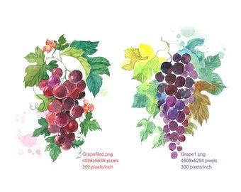 Clipart Watercolour Grapes, Grapes Red, Grapes Black, Digital Download, Wall Decor, Home Decor, Botanical Wall Print