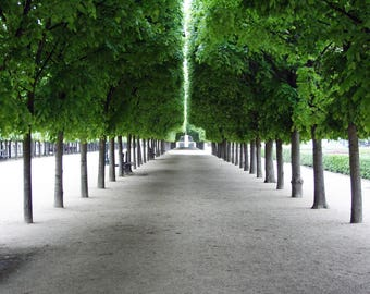 Green Trees in Paris, France Photo
