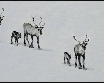 Reindeer Walking in the Snow