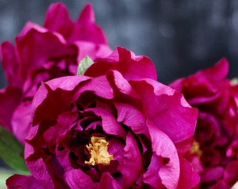 Paper Peony Bundle - Fuchsia Crepe Paper Flowers with Book Paper Accent