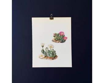 Vintage Cactus Bookplate / Print