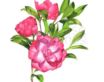 Camellia print of watercolor painting. C21317, A4 size, Camellia watercolor, Camellia painting, flower watercolor, floral print