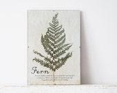Pressed Herbs- Fern in Frame (6)