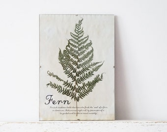 Pressed Herbs- Fern in Frame (6)