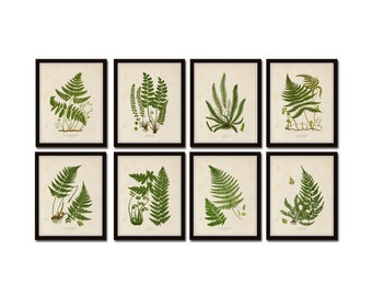 Vintage Ferns Print Set No. 25 Giclee, Wall Art, Collage, Illustration, Vintage Botanical, Botanical Prints, Fern Prints, Woodland, Wall Art