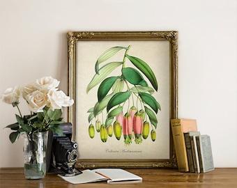 Vintage Botanical Print, Pink Herb Flower Print, Antique Botanical Reproduction, Floral Art Print, Decorative Botanical Reproduction FL084