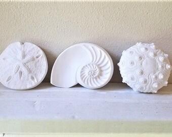 Sea shell wall sculptures, sea urchin sculpture, nautilus shell, sand dollar, nautical decor