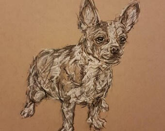 Chihuahua 'Radley' -  original charcoal illustration