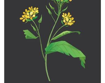 Wild Mustard- Digital Print