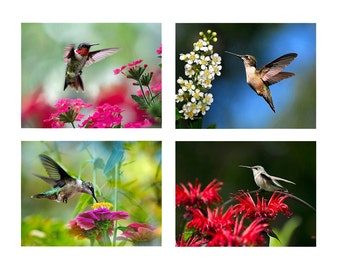 Set of 4 Hummingbird Prints, Wall Art Set, Humming bird Photo Set, Colorful Wall Art, Hummingbird Photography, Set of Prints, Photo Gift Set