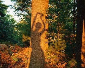 Tree Pose - Nature Yoga Shadow Fine Art Photography