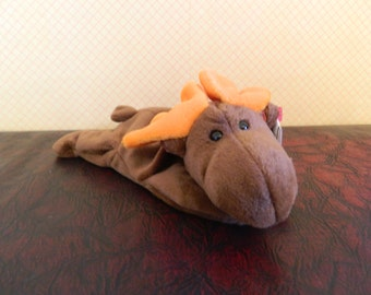 "TY Brown Moose Beanie Baby ""Chocolate"" (B)"