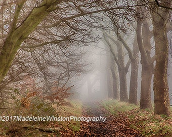 A Foggy Day at Hampstead Heath London