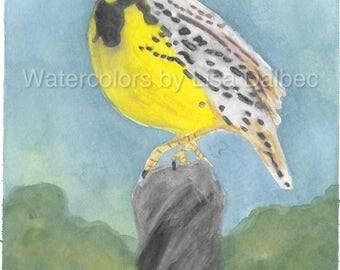 Meadow Lark Watercolor Print