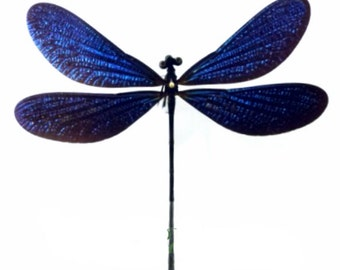 Supplies for your artworks - real insects - :  5 pcs Vestalis melania Odonata A1  FREE SHIPPING , already spread , metallic