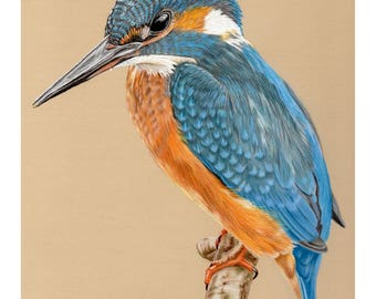 Kingfisher - Open Edition Giclee Print - 8x10 inches