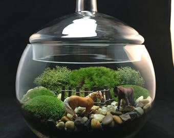 Equestrian Terrarium, Horse Terrarium, Moss Terrarium, Horse Lover Gift, Horse Decor, Terrarium, Indoor Plant, Horse Gift