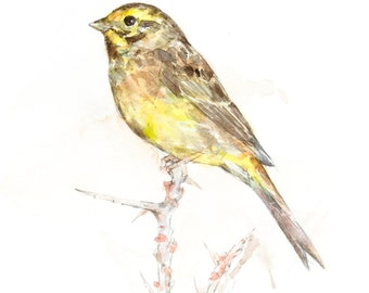 Yellowhammer watercolor painting - bird watercolor painting - 5x7 inch print - 0097
