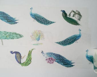 Design Washi tape Peacock bird