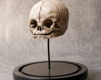 Replica Fetus Skull on black rod and round black base