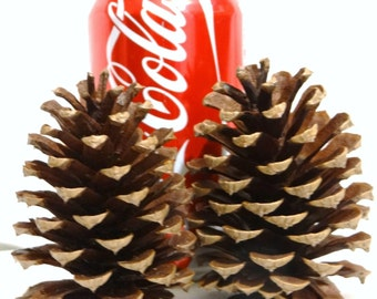 """30x 3"""" - 4"""" PINE CONES Natural Real Pinecones Big Medium Small Thanksgiving Holiday Decorations Fall Halloween Wreaths Kids Christmas Crafts"""
