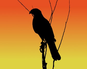 DIGITAL DOWNLOAD - Cooper's Hawk Silhouette at Sunset