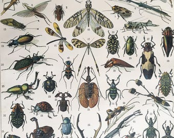 INSECTS.1904's-Old Chromolithography.Color. 12,2 ins x 9,45 ins