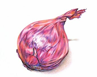 Original illustration - drawing of red onion